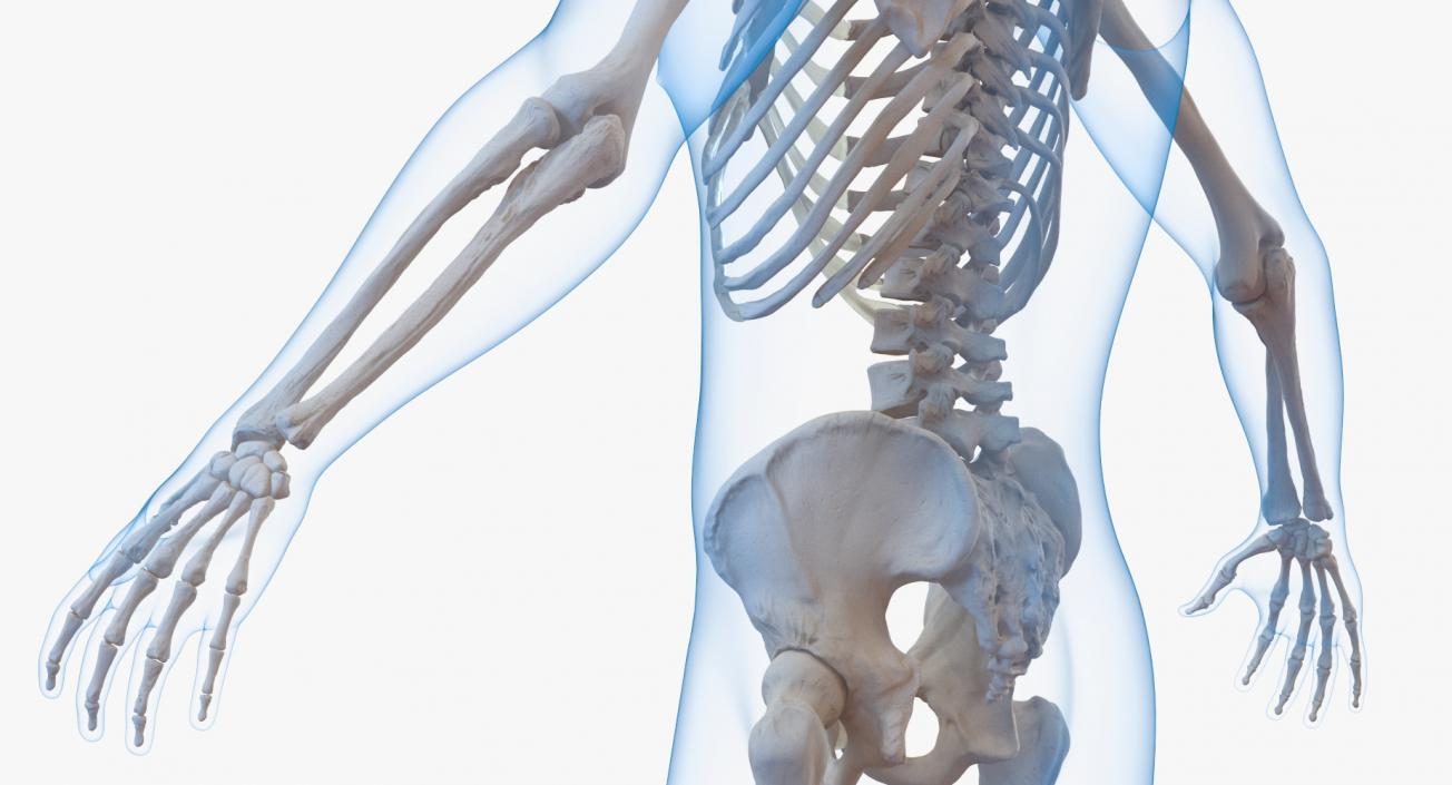 3D model Male Body with Skeleton Rigged