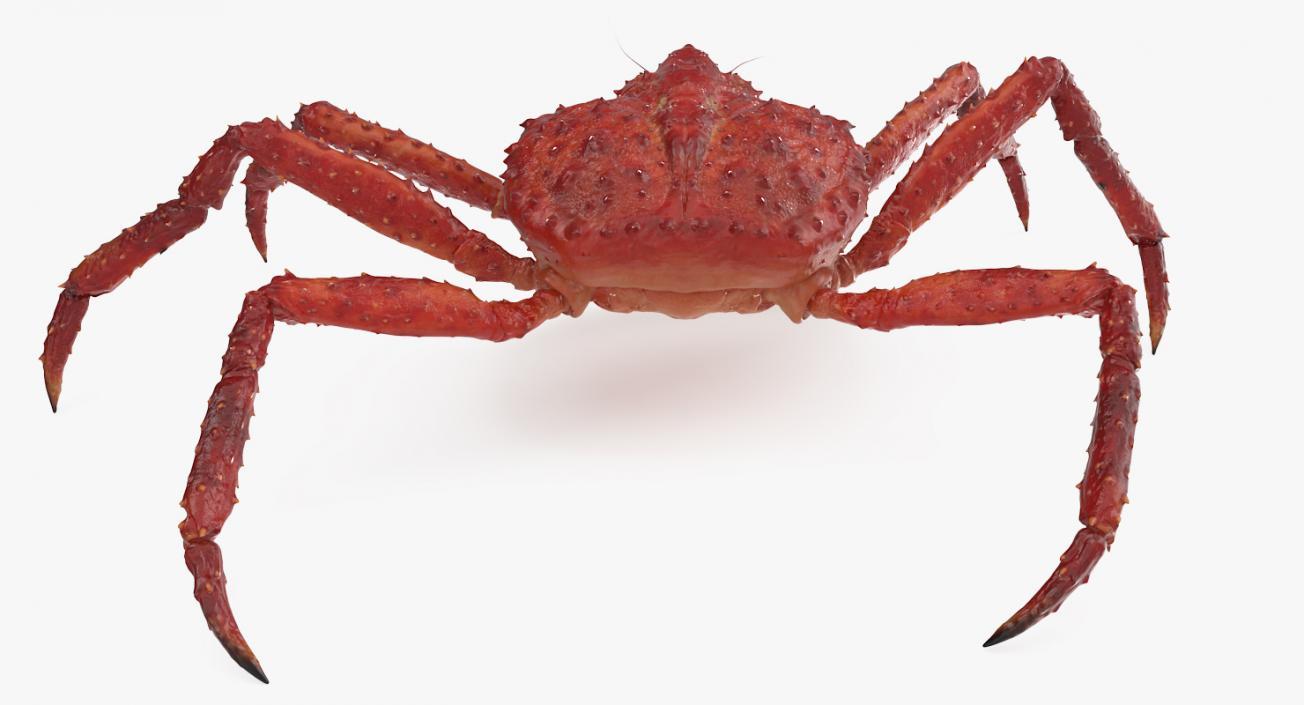 3D model Alaskan King Crab Walking Pose ...