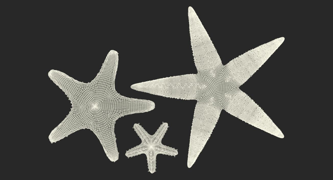 3D Starfishes Collection 2 model