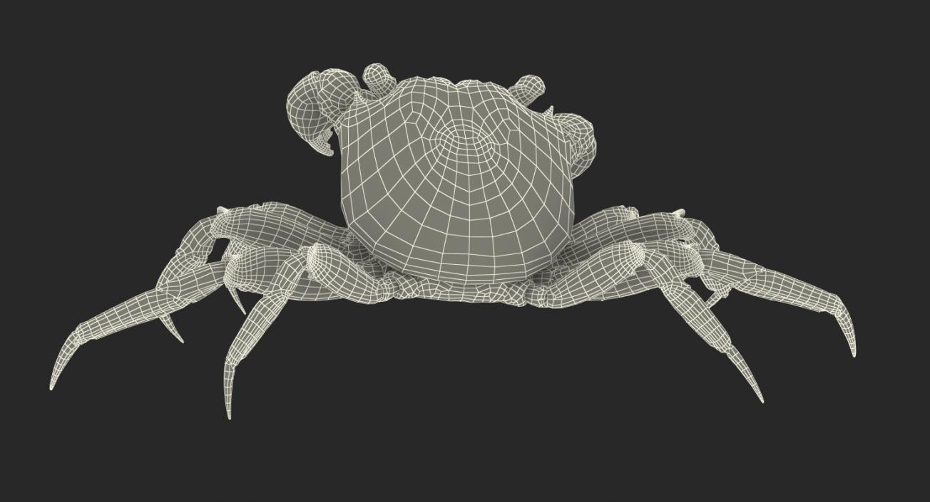 Vampire Crab Geosesarma Rigged with Fur 3D model