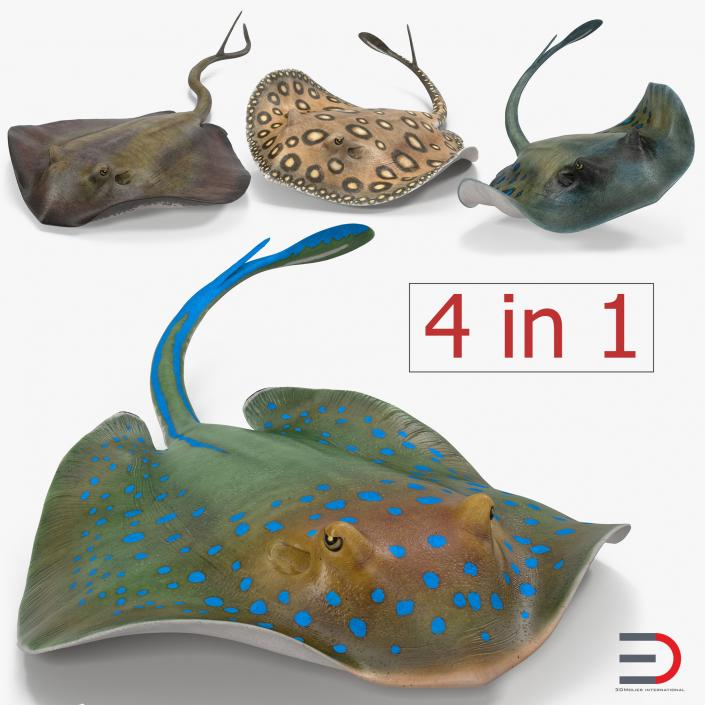 3D Stingray Rigged Collection