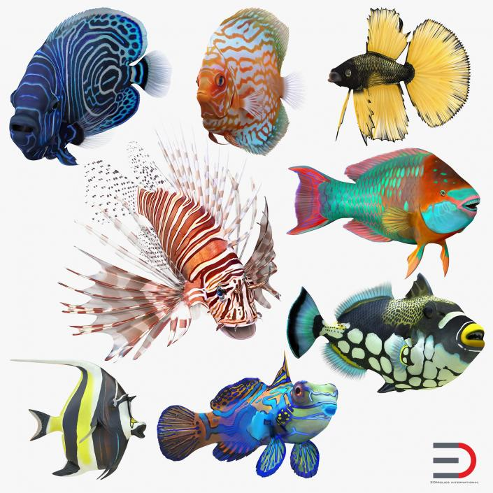 3D Coral Fishs Collection 2 Rigged