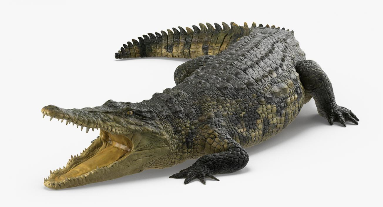 3D Crocodile Rigged
