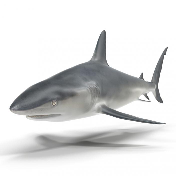 3D model Caribbean Reef Shark