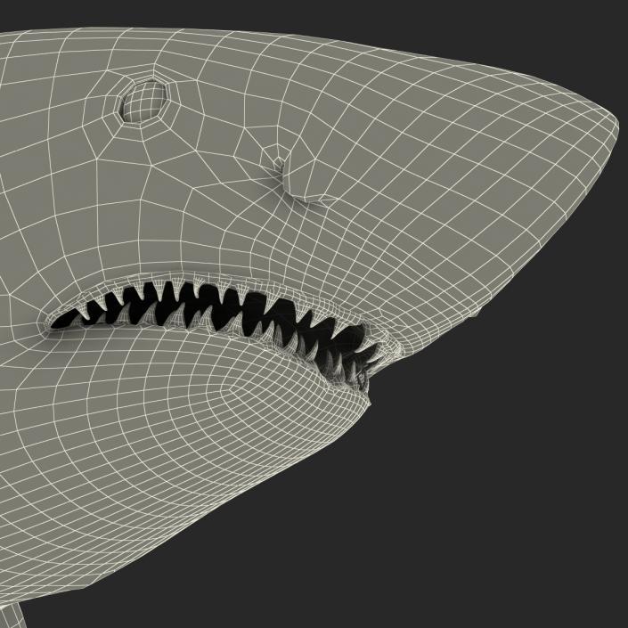 Great White Shark 3D