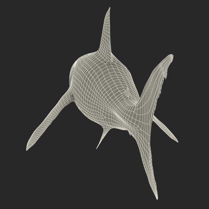 Great White Shark Rigged 3D model