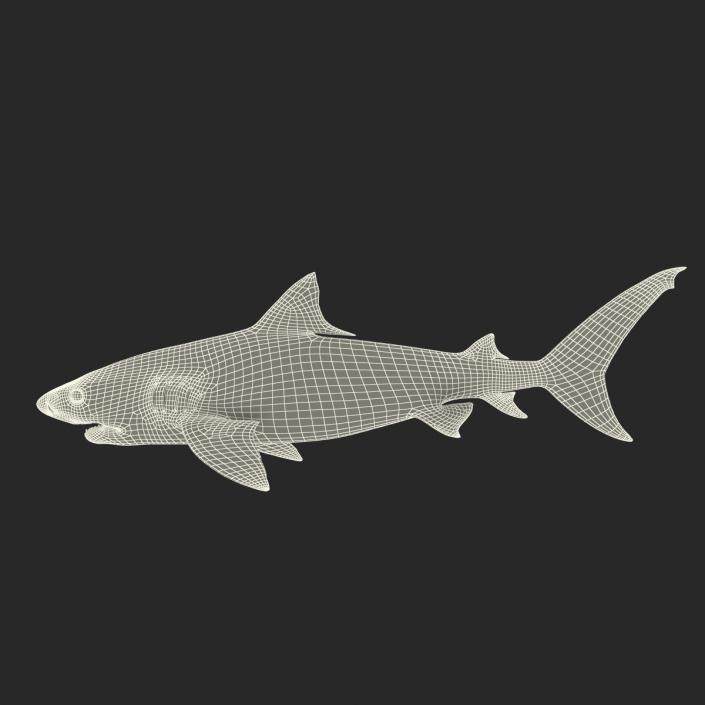 3D Tiger Shark