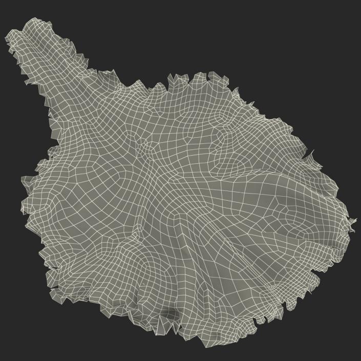 Lettuce Leaf 3D