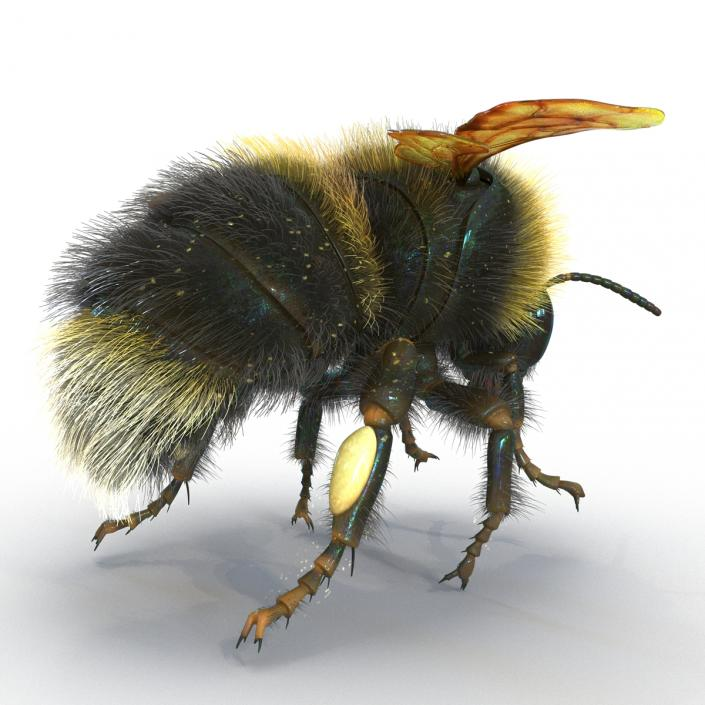 3D Bumblebee Rigged