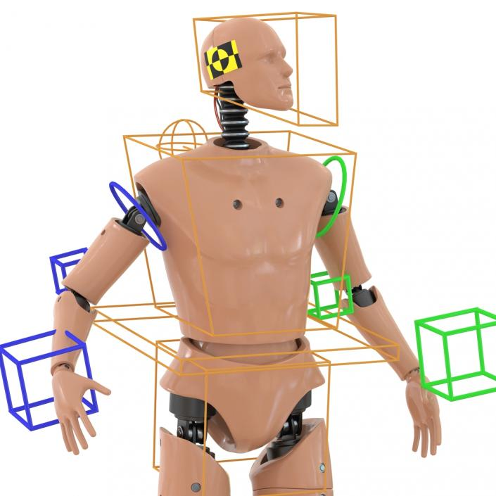 3D Male Crash Test Dummy Rigged model
