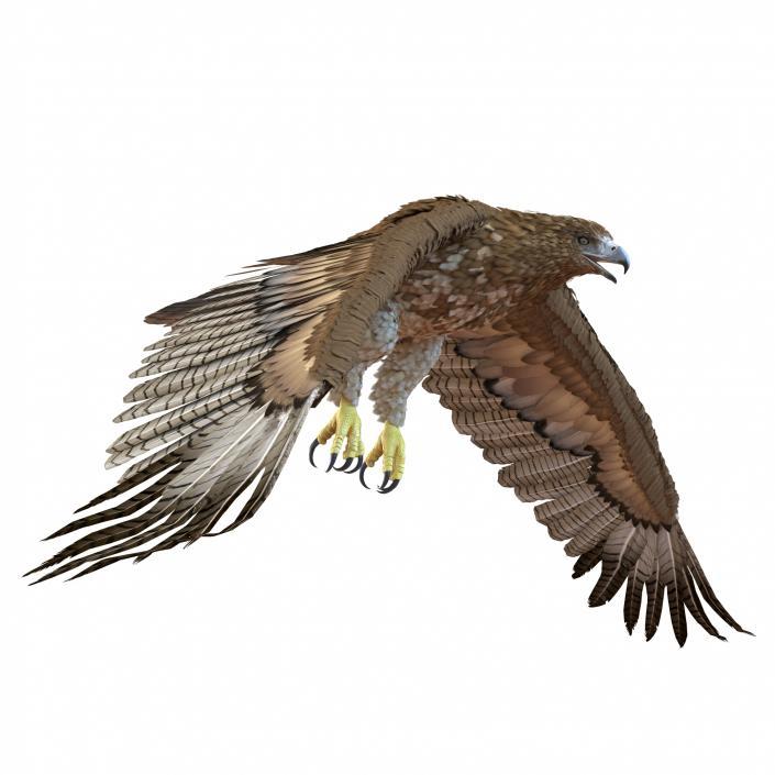 Gurney Eagle Rigged 3D model