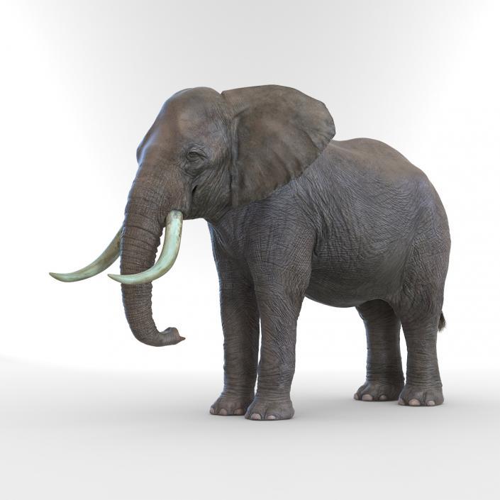 3D model Elephant