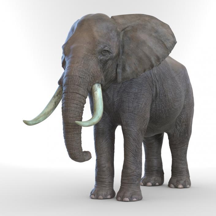 3D model Elephant Rigged