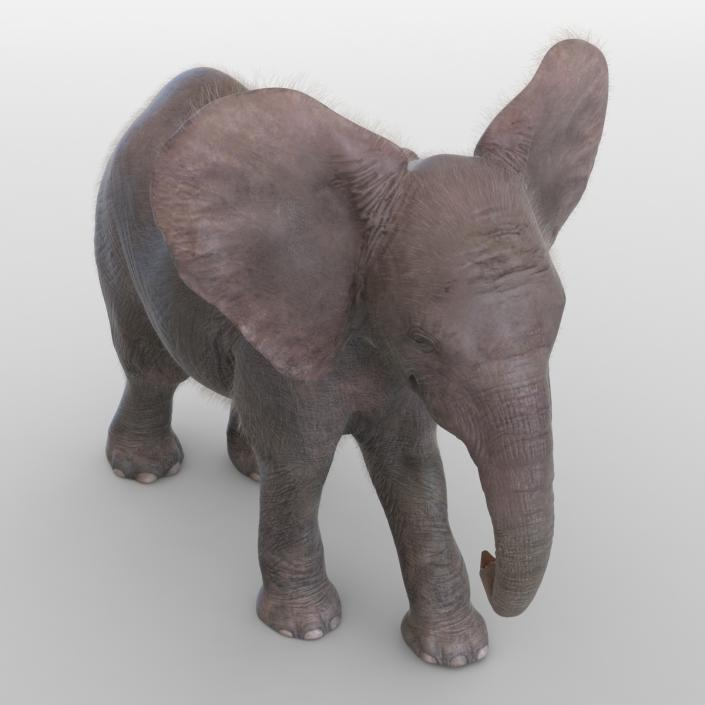 Baby Elephant Rigged with Fur 3D model