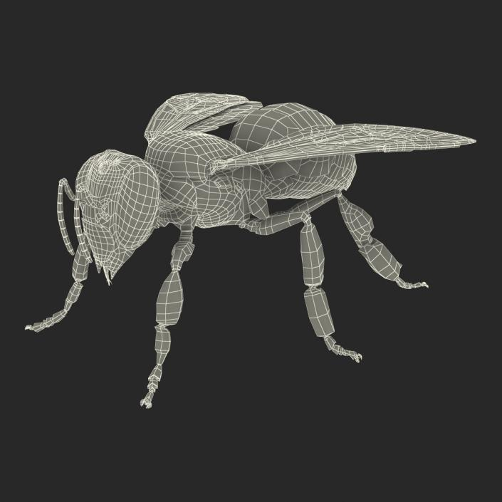 Honey Bee 3D model