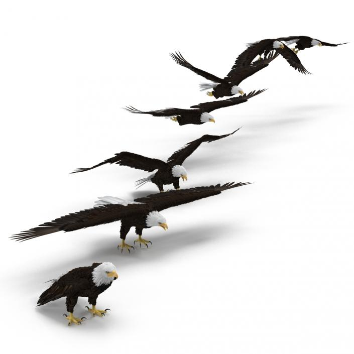 3D Bald Eagle Collection