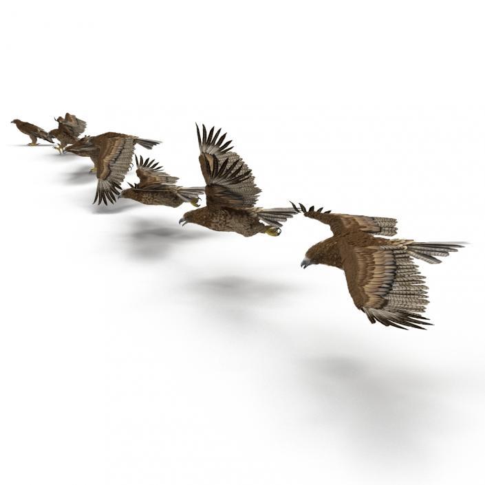 Eagles 3D Models Collection 3D
