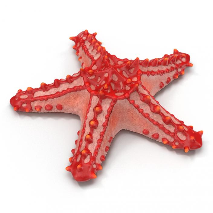 Red Knobbed Starfish Rigged 3D