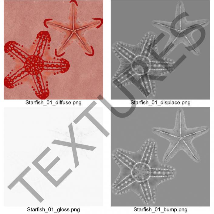 3D model Red Knobbed Starfish