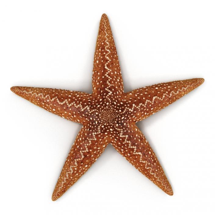 Starfish 2 Rigged 3D