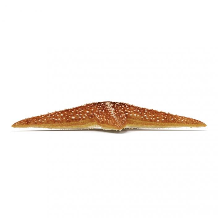 3D model Starfish 2