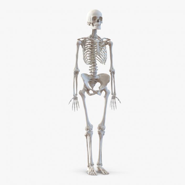3D Human Female Skeleton