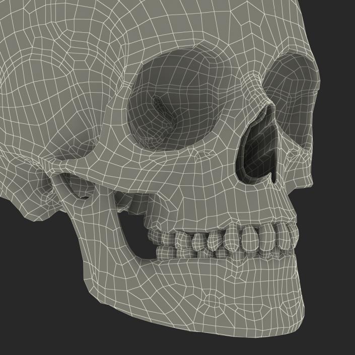 3D Female Human Skull model
