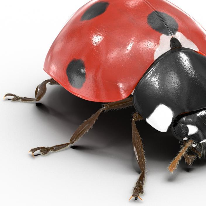 3D LadyBug with Fur