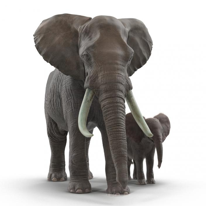 Elephants Rigged Collection 3D