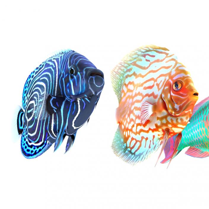 Coral Fishs Collection 3D