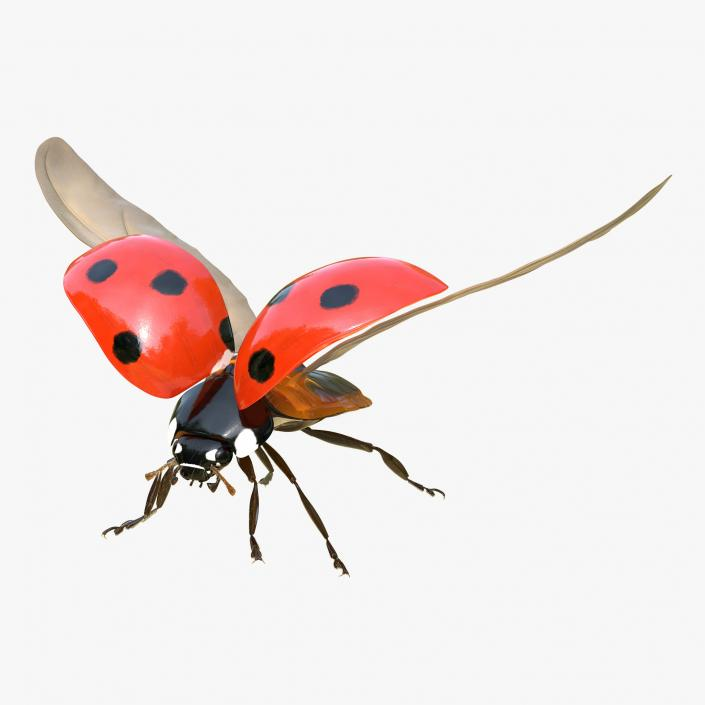3D model LadyBug Rigged Collection