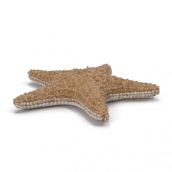 Starfish with Fur 3D