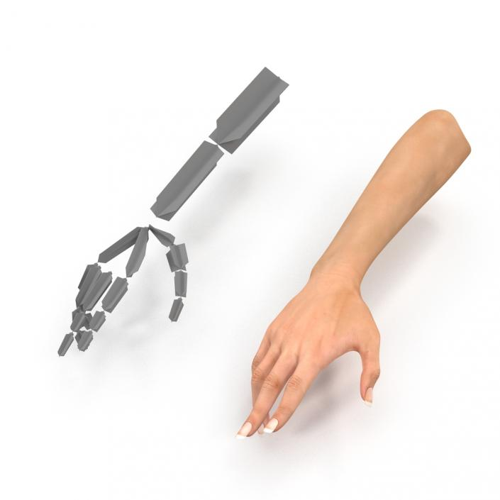 3D model Female Hand 2 Rigged