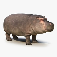 Hippopotamus with Fur