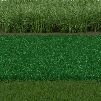 Grass Fields Collection 2. Render 9