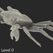Red Rock Crab Rigged for Maya. Preview 26