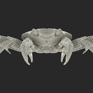 Red Rock Crab Rigged for Maya. Preview 4