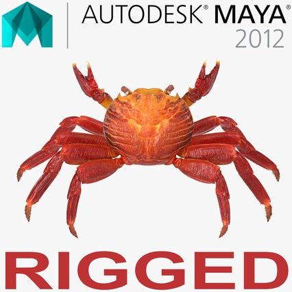 Red Rock Crab Rigged for Maya. Render 1