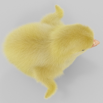 Chick with Fur. Render 12