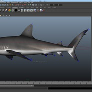 Dusky Shark Rigged for Maya. Preview 24