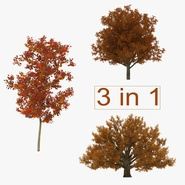 Autumn White Oak Trees Collection