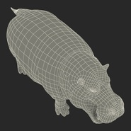 Hippopotamus Rigged for Cinema 4D. Preview 32