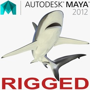 Dusky Shark Rigged for Maya. Preview 1