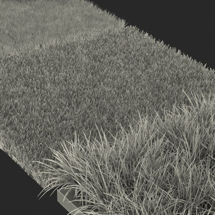 Grass Fields Collection 2. Render 15