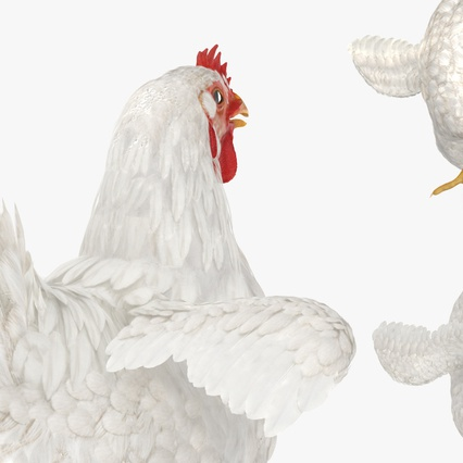 White Chicken. Render 11