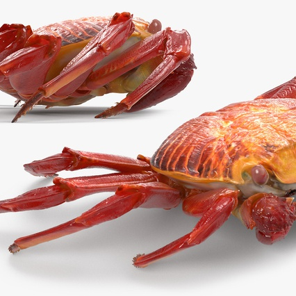 Red Rock Crab Rigged for Maya. Render 12