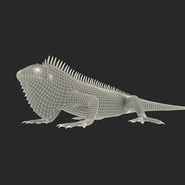 Green Iguana Rigged for Cinema 4D. Preview 30