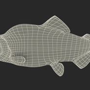 Pink Salmon Rigged for Maya. Preview 24