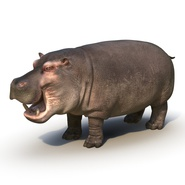 Hippopotamus Rigged for Cinema 4D. Preview 6
