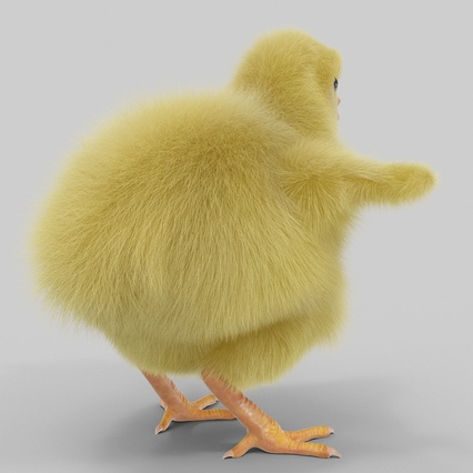 Chick with Fur. Render 11